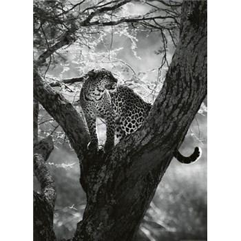 Vliesové fototapety leopard na stromě rozměr 184 x 254 cm