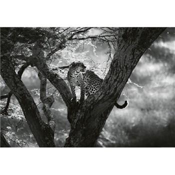 Vliesové fototapety leopard na stromě rozměr 368 cm x 254 cm