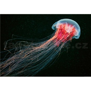 Vliesové fototapety medúza rozměr 368 cm x 254 cm
