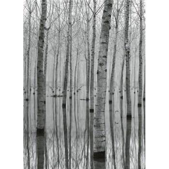 Vliesové fototapety březový les ve vodě rozměr 184 cm x 254 cm