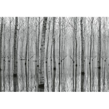 Fototapety březový les ve vodě rozměr 368 cm x 254 cm