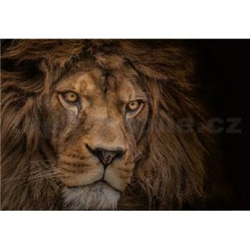 Vliesové fototapety lev rozměr 368 cm x 254 cm