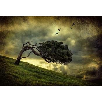 Fototapety děsivý strom rozměr 368 cm x 254 cm