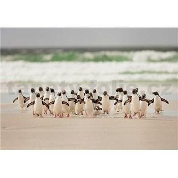 Fototapety tučňáci rozměr 368 cm x 254 cm