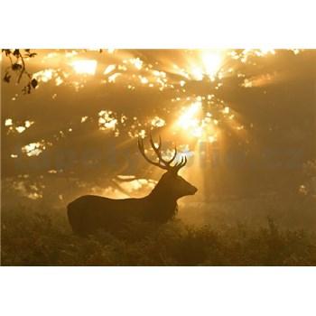 Fototapety jelen rozměr 368 cm x 254 cm