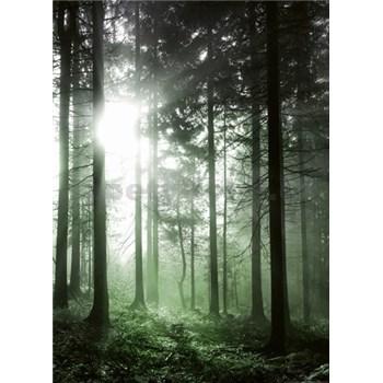 Vliesové fototapety sluneční paprsky v lese rozměr 184 x 254 cm