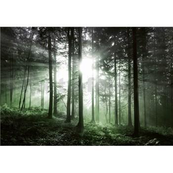 Fototapety sluneční paprsky v lese rozměr 368 cm x 254 cm