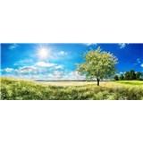 Vliesové fototapety rozkvetlý strom rozměr 375 cm x 150 cm