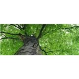 Vliesové fototapety koruny stromů rozměr 375 cm x 150 cm