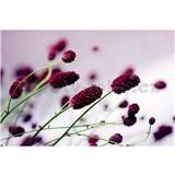 Vliesové fototapety květiny fialové rozměr 375 cm x 250 cm