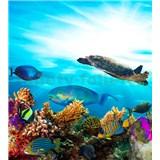 Vliesové fototapety mořské ryby rozměr 225 cm x 250 cm