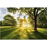 Fototapety svítání v parku rozměr 368 cm x 254 cm