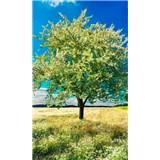 Vliesové fototapety rozkvetlý strom rozměr 150 cm x 250 cm