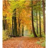 Vliesové fototapety les na podzim rozměr 225 cm x 250 cm
