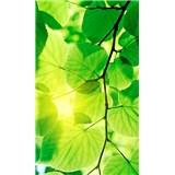 Vliesové fototapety zelené listy rozměr 150 cm x 250 cm