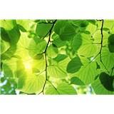 Vliesové fototapety zelené listy rozměr 375 cm x 250 cm