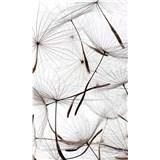 Vliesové fototapety létající pampelišky rozměr 150 cm x 250 cm