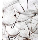 Vliesové fototapety létající pampelišky rozměr 225 cm x 250 cm