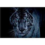 Vliesové fototapety tygr tyrkysové oči rozměr 312 cm x 219 cm