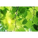 Vliesové fototapety zelené listí rozměr 375 cm x 250 cm