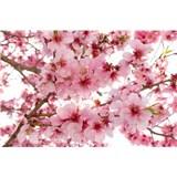 Vliesové fototapety jabloňové květy rozměr 375 cm x 250 cm