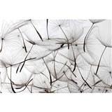 Vliesové fototapety pampelišky rozměr 375 cm x 250 cm