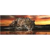 Vliesové fototapety jaguár rozměr 250 cm x 100 cm