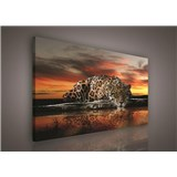 Obraz na plátně jaguár 100 x 75 cm