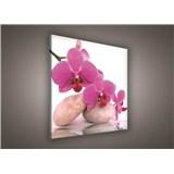 Obraz na plátně orchidej růžová 80 x 80 cm