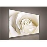 Obraz na plátně bílá růže 75 x 100 cm
