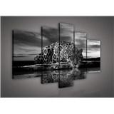 Obraz na plátně Jaguár černobílý 170 x 100 cm
