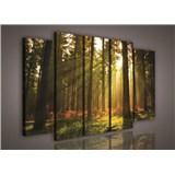 Obraz na plátně les s východem slunce 150 x 100 cm