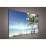Obraz na plátně palmy na pláži 100 x 75 cm