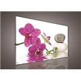 Obraz na plátně orchidej 75 x 100 cm
