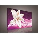 Obraz na plátně lilie na růžovém podkladu 75 x 100 cm
