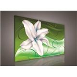 Obraz na plátně lilie na zeleném podkladu 75 x 100 cm
