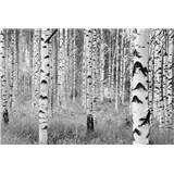 Vliesové fototapety břízy 368 x 248 cm