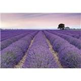 Vliesové fototapety Provence rozměr 368 x 248 cm