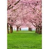 Fototapety Cherry Trees rozměr 183 cm x 254 cm