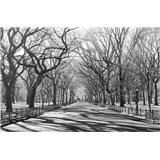 Fototapety Poets Walk NY rozměr 175 cm x 115 cm