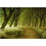 Vliesové fototapety alej stromů rozměr 366 x 254 cm