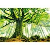 Vliesové fototapety strom v lese rozměr 366 cm x 254 cm