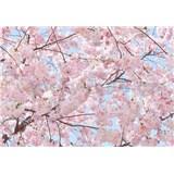 Fototapety rozkvetlá třešeň Pink Blossoms rozměr 366 cm x 254 cm - POSLEDNÍ KUS