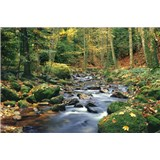 Fototapety Forest Stream rozměr 366 cm x 254 cm