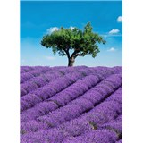 Fototapety Provence rozměr 183 cm x 254 cm