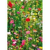 Fototapety Flower Field rozměr 183 cm x 254 cm
