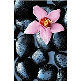 Fototapety Stone Orchid rozměr 115 cm x 175 cm