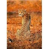 Fototapety leopard rozměr 184 cm x 254 cm