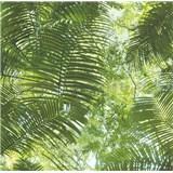 Vliesové tapety na zeď Collage palmové listy