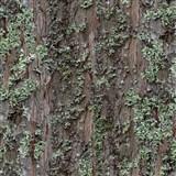 Papírové tapety na zeď kůra stromu